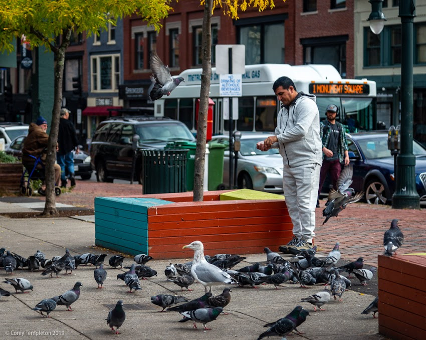 Feeding the pigeons, and one sneaky seagull, in Congress Square Park.