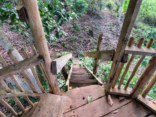 Viewing platform over Kibale Forest at the Bigodi Wetlands in Western Uganda