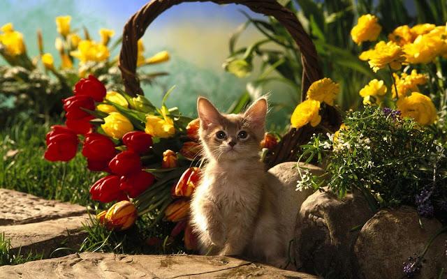 اجملصور قطط جميلة hd