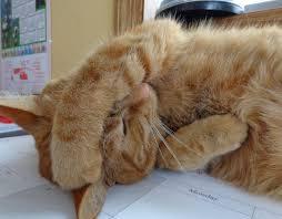 Pertumbuhan Bulu Anak Kucing Yang Ideal Dan Cara Merawatnya