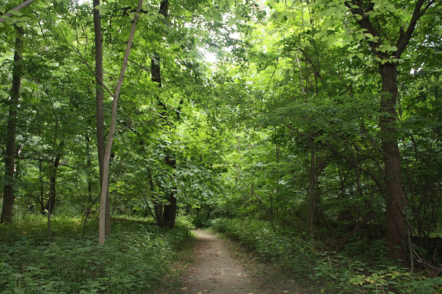 Forest trail in Black Hawk State Park in Rock Island, Illinois