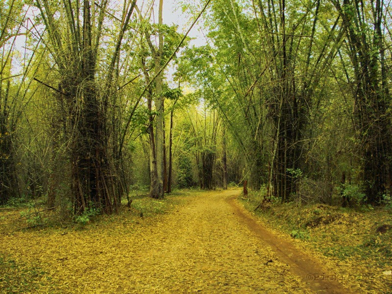 road in Kerala country side