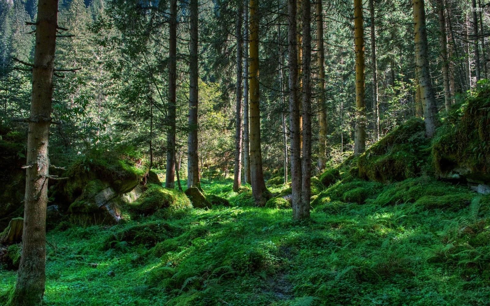 Patada De Caballo Fondos Animados: Patada De Caballo: Bosque. Forest