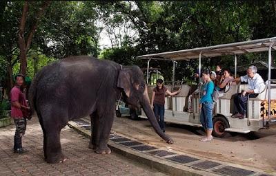 Zoo Melaka Malaysia