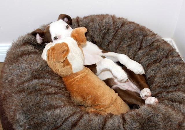 funny puppy photos