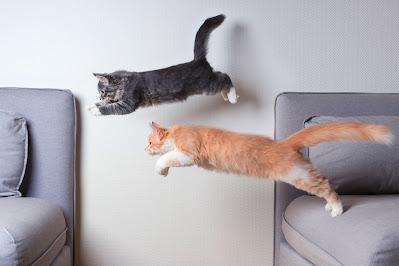 10 ejercicios para gatos que tu mascota disfrutará