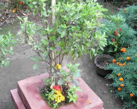 Choodi Pooja - Importance of Choodi Pooja in Shravan Month
