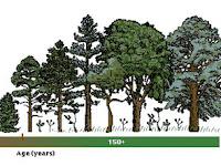 Tahapan dan Jenis Suksesi Ekosistem