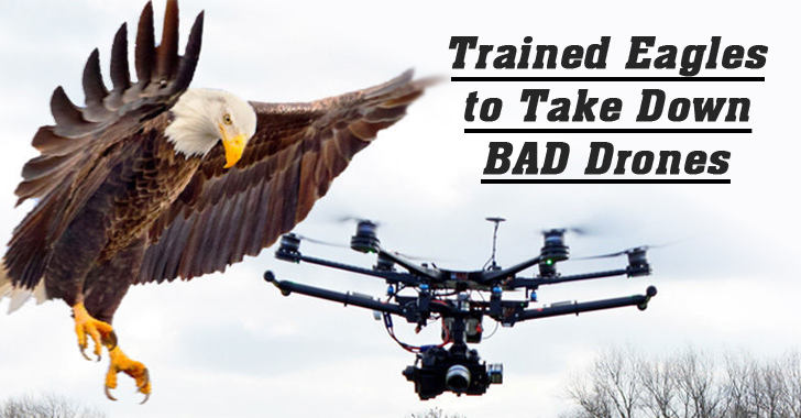 Dutch Police Training Eagles to Take Down Rogue Drones
