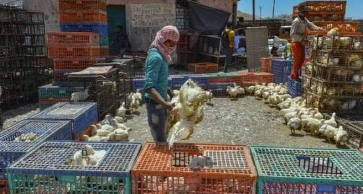 दिल्ली 35-40 रुपये किलो बिक रहा मुर्गा, फिर भी नहीं हैं खरीदार