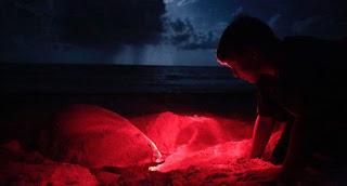 el desove de las tortugas en Espiritu Salvaje