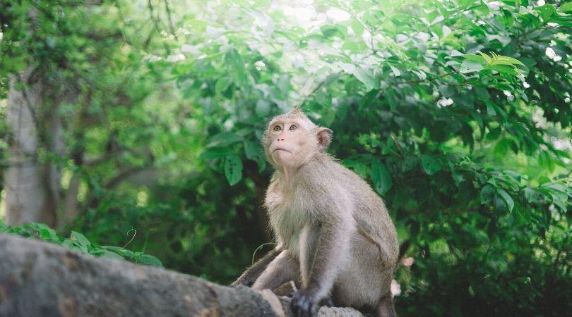 Arti Mimpi Melihat Monyet Berdasarkan Jenis