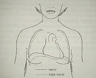 perubahan anatomi & fisiologi pada Wanita