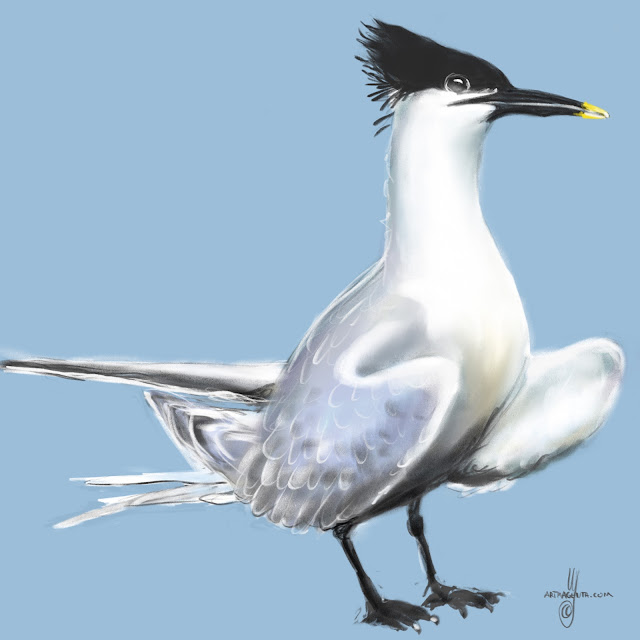 Sandwich Tern bird painting by Artmagenta