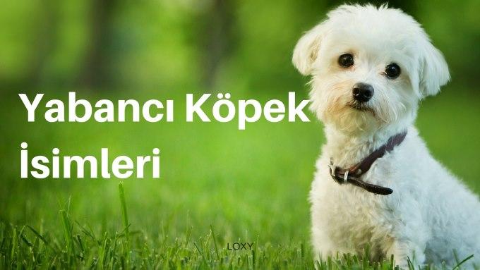 yabancı Köpek İsimleri