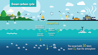 Siklus karbon di bumi