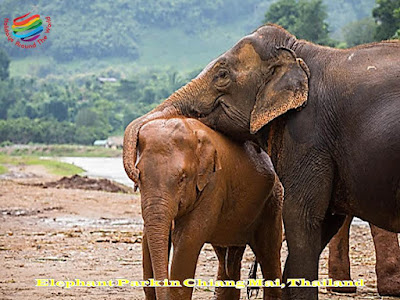 Elephant Park in Chiang Mai, Thailand