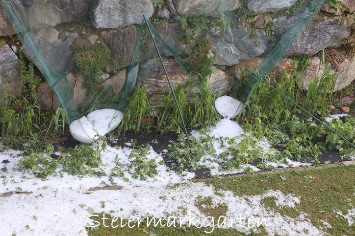 Hagelschaden-Indianerbeet-Steiermarkgarten