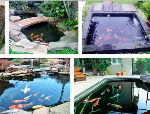 Kolam yang Baik untuk Ikan Koi