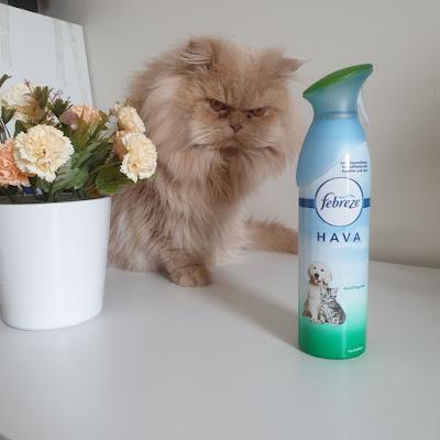 kedi bakımı, kedi kokusu, kedi kumu kokusu, kedi koku giderici, koku bırakma, erkek kedi