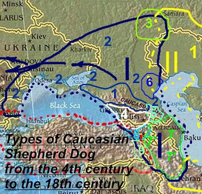 Типы кавказской карачаевской овчарки