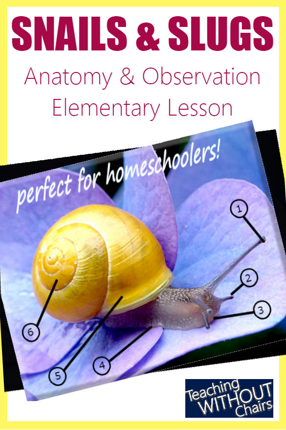 Snail Anatomy + Snails & Slugs Science Homeschool Unit Study ...