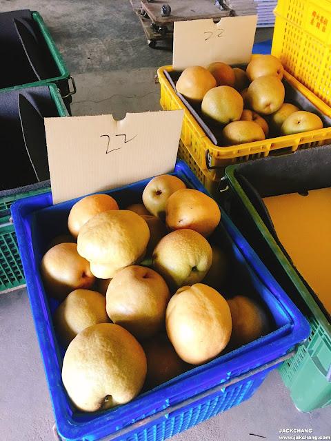 不同大小的水梨