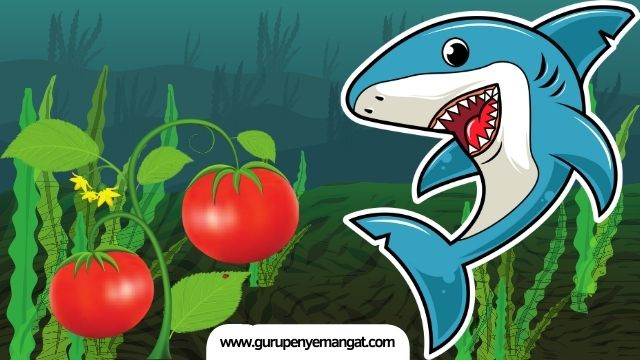 Pantun Ikan Hiu Makan Tomat yang Lucu