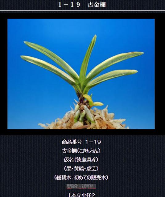 http://www.fuuran.jp/1-19.html