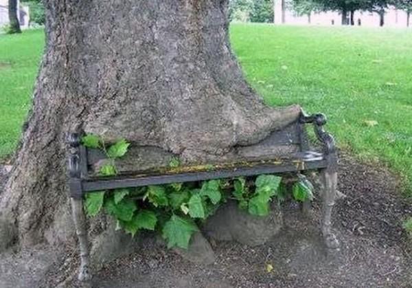 أشجار تبتلع كل ما يعترض نموها 7-600x419.jpg