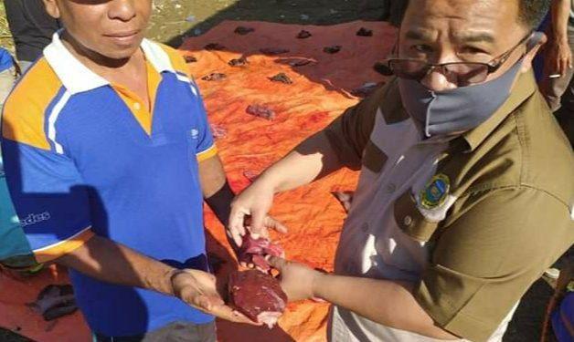 Dinas Peternakan dan Perikanan Sungai Penuh Temukan Cacing Hati di Hewan Qurban