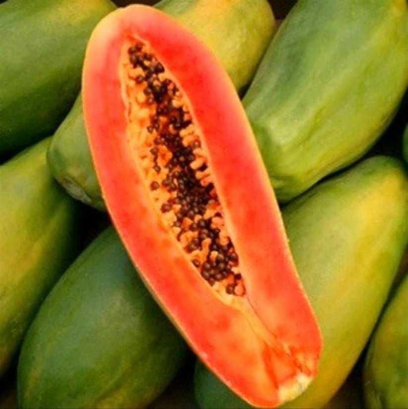 100 benih biji Pepaya Thailand jumbo Batu