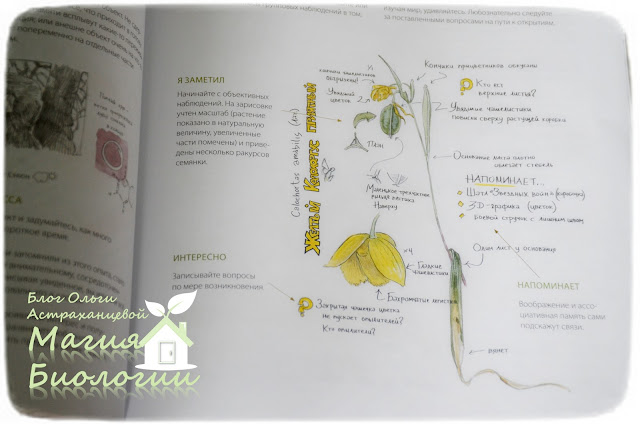 биологический рисунок-магия-биологии-книги-Лоуз-дневник