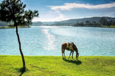 Quý khách nên thử cảm giác cưỡi ngựa trên những cung đường ven hồ ở Đà Lạt