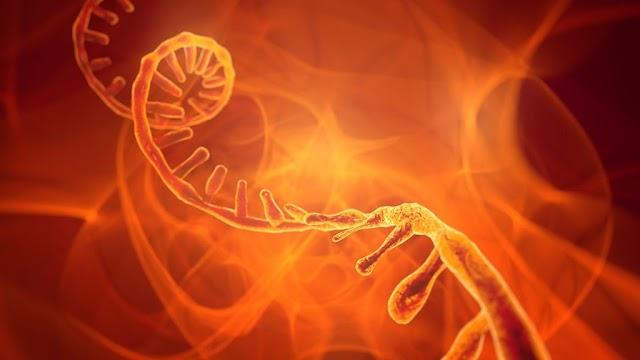 RNA'nın Vücuttaki Görevi ve Rolleri Nedir?