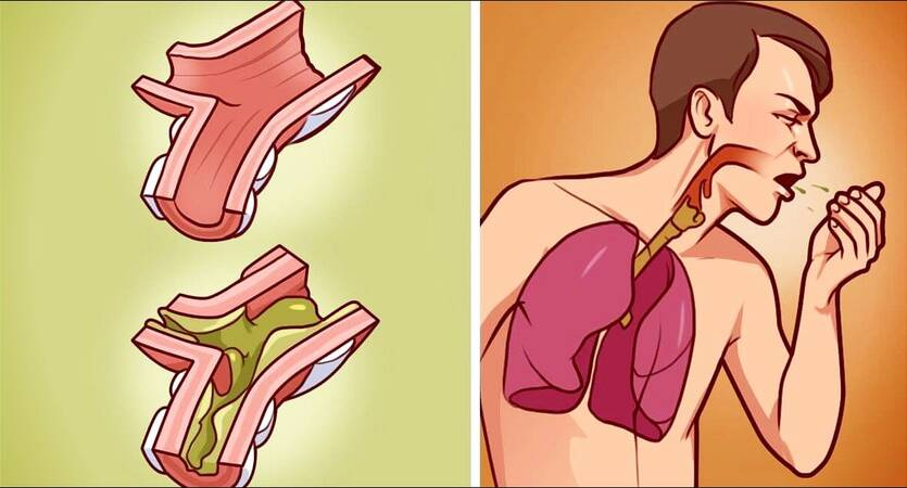 Mucus in the Body