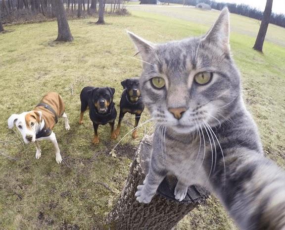 تجميعة مضحكة من صور سيلفي الحيوانات