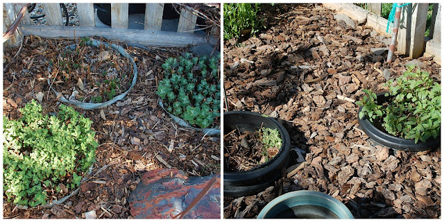 Maybe It's Just Me: Building a Herb Garden