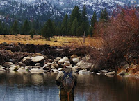 Carson valley nevada for Topaz lake fishing report