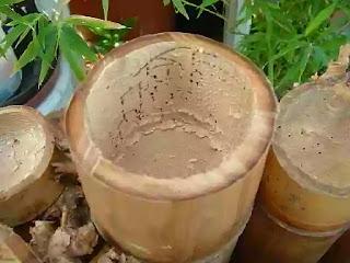 mengatasi-kumbang-bubuk-bambu.jpg