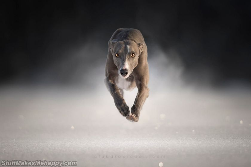 Wonderful Pictures of Super Flying Dogs by Claudio Piccoli