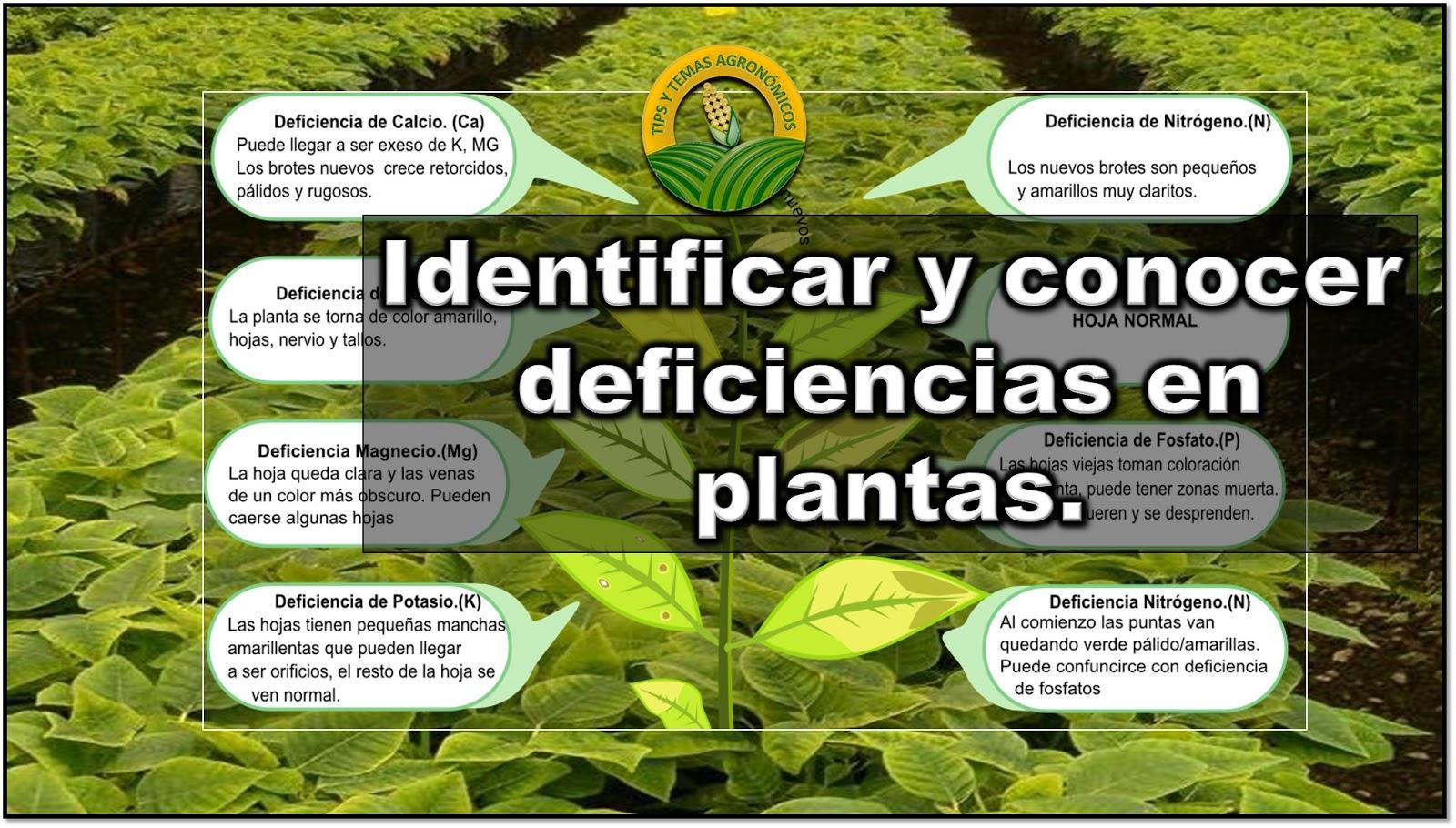 Como identificar deficiencias nutricionales en nuestro for Potasio para plantas