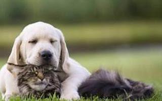 Pet охорони здоров'я план