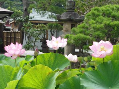 本覚寺のハス