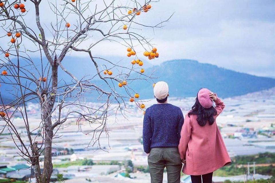 Tay nắm tay qua từng mùa hồng Đà Lạt - Ảnh : Tịnh Nguyễn