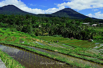 Jatiluwih Rice Terrace berlatar gunuung - Backpacker Manyar