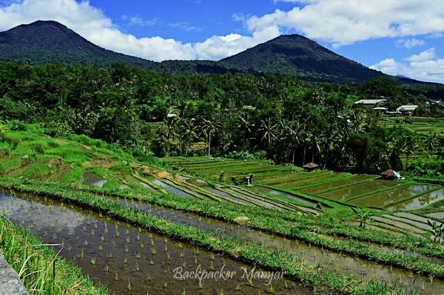 Jatiluwih Rice Terrace Bali berlatar gunung