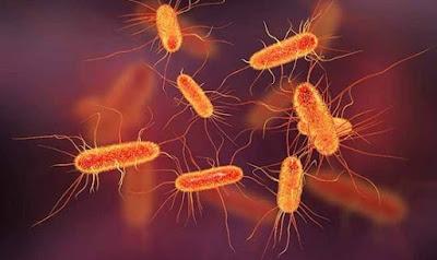 Gambar Bakteri E.Coli