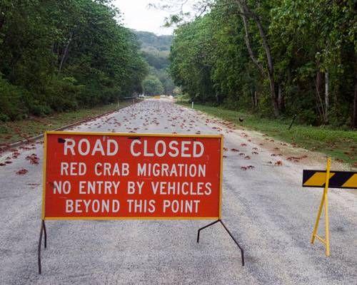 オーストラリアのクリスマス島にはカニ専用の橋がある?【n】