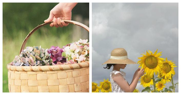 hortensia y girasol